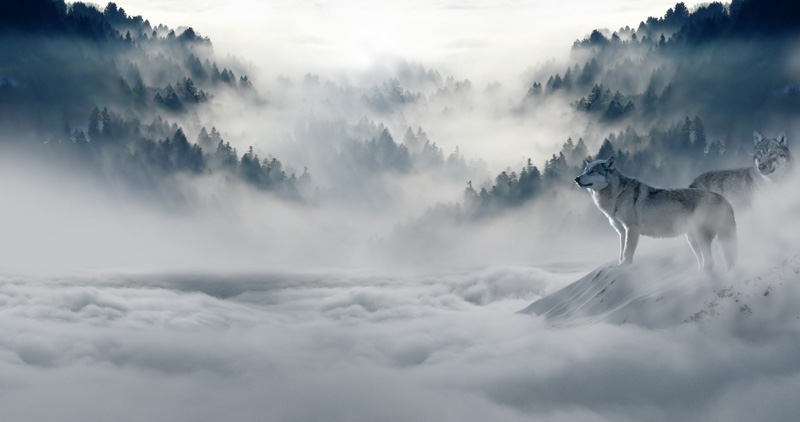 fog-foggy-hazy-89773.jpg