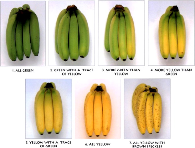 Its easy to relate tea types to the oxidation of a banana.