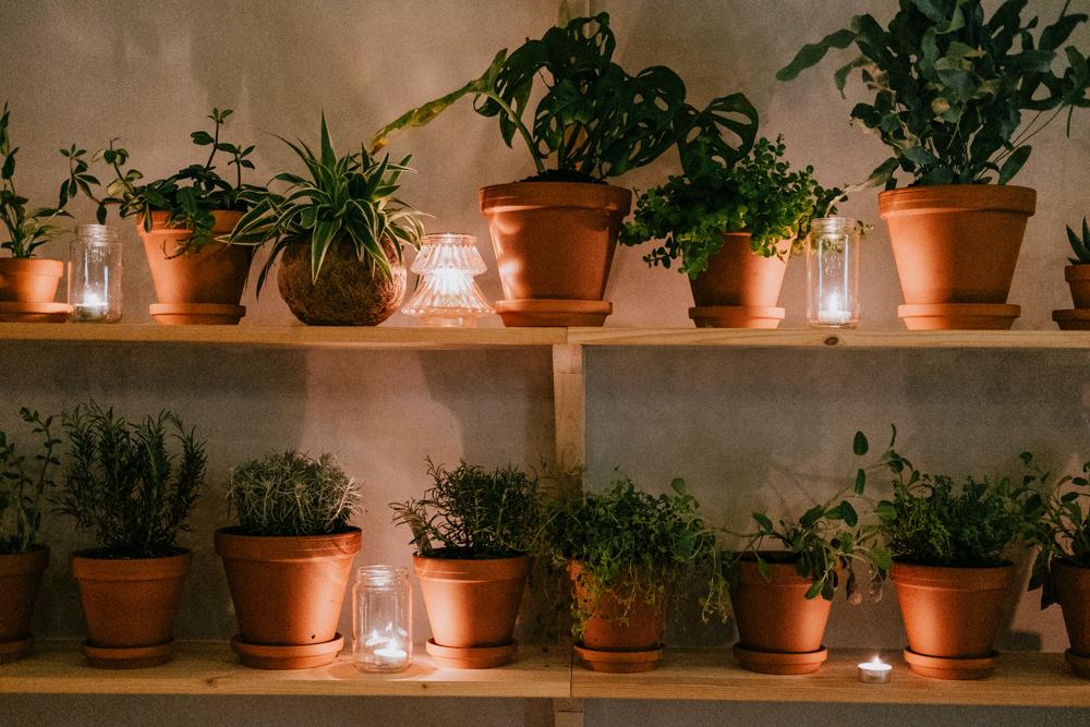 pflanzenfreude-wearecity-urbanjunglekitchen-koeln-atheneadiapoulihariman-24.jpg