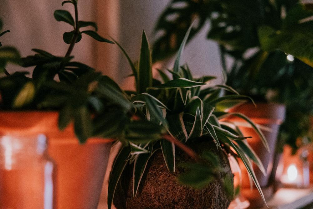 pflanzenfreude-wearecity-urbanjunglekitchen-koeln-atheneadiapoulihariman-30.jpg