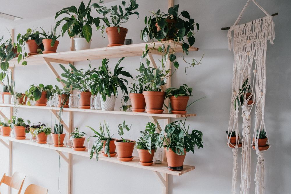 pflanzenfreude-urbanjunglekitchen-einweihnung-koeln-wearecity-simonhariman-5.jpg
