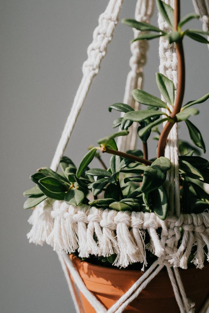pflanzenfreude-urbanjunglekitchen-einweihnung-koeln-wearecity-simonhariman-13.jpg
