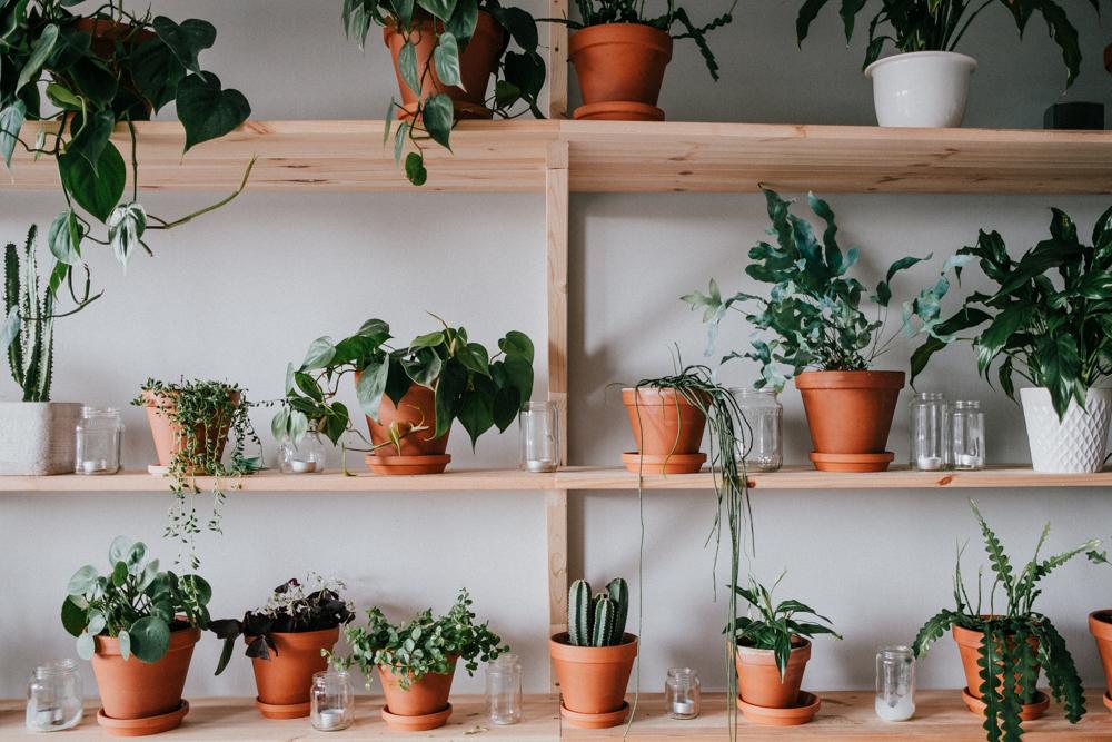 pflanzenfreude-urbanjunglekitchen-einweihnung-koeln-wearecity-simonhariman-8.jpg