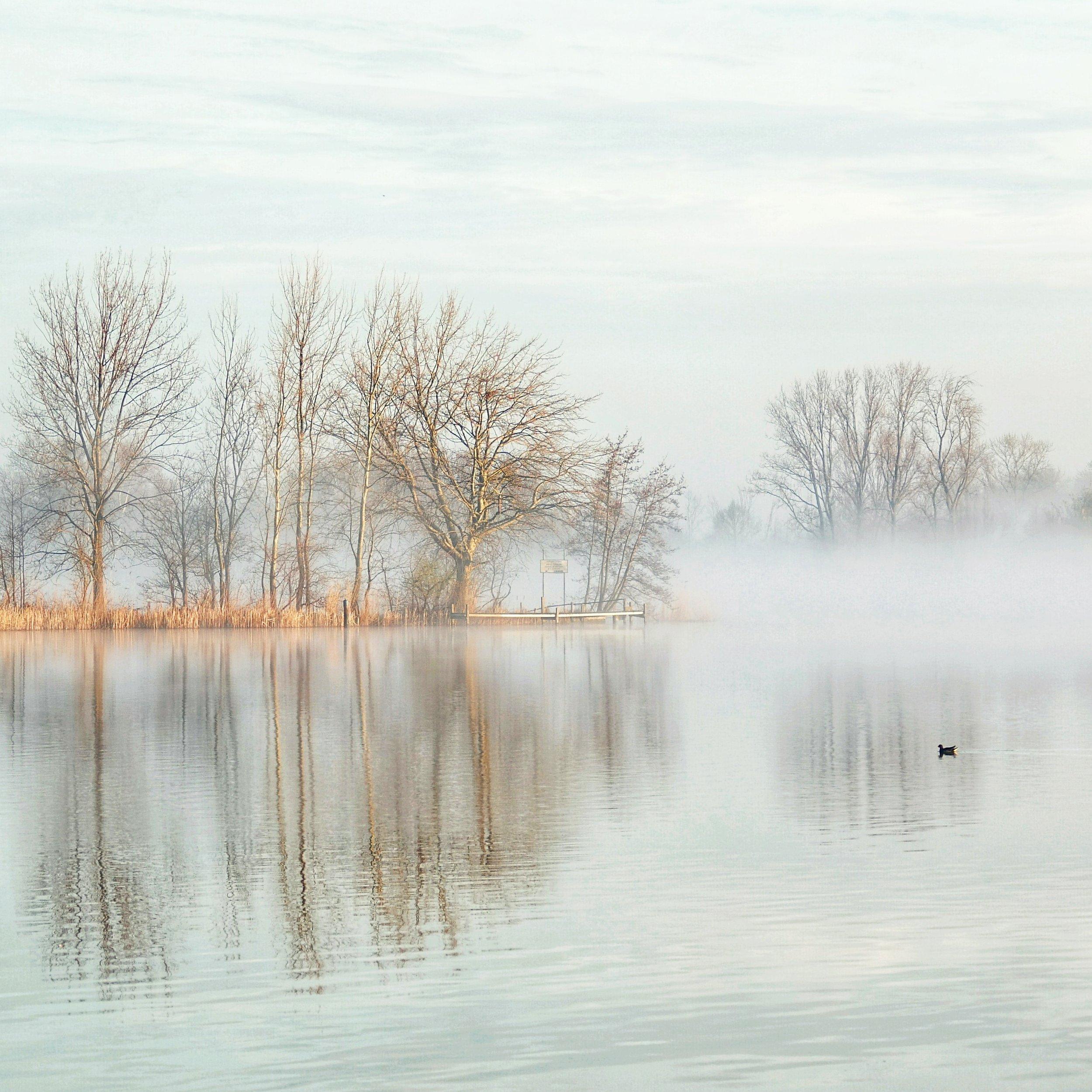 Misty scenes along De Rotte.