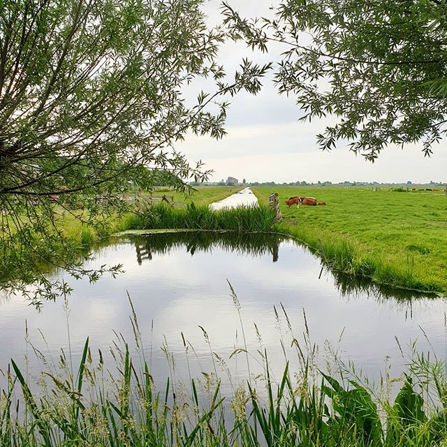 Nature in frame. 🌿  Nothing special, just a typical pic taken with cycle cam. 🚲  Have a wonderful Sunday!  __  You can see more images on my other account @garethmateblog  #dutch_landscape #gouda #placestowanderandexplore #cycling #natuur 'Thoughts and Stories from the Great Outdoors'  www.garethmate.com
