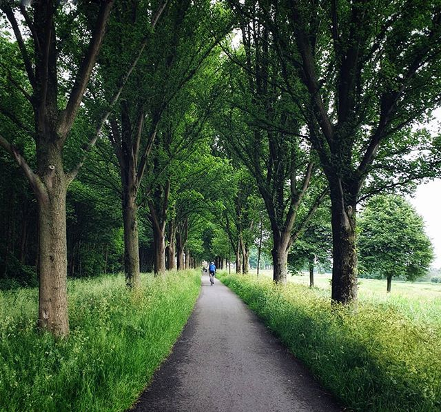 There are many tree-lined routes in the Netherlands.  This one is a particular fave!  __  You can see more images on my other account @garethmateblog  #dutch_landscape #rotterdam #placestowanderandexplore #cycling #invitingroads 'Thoughts and Stories from the Great Outdoors'  www.garethmate.com