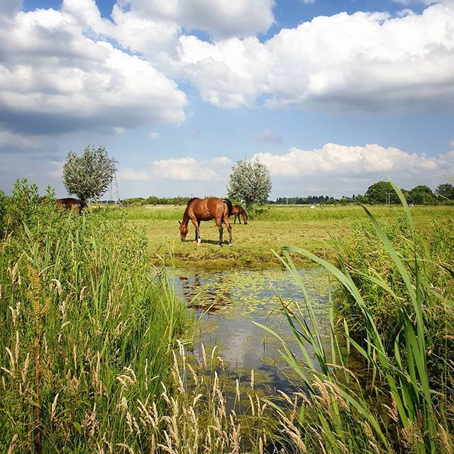 The return of the warmer  weather ☀️ Enjoy your Sunday!  __  You can see more images on my other account @garethmateblog  #zuidholland #zuidholland #placestowanderandexplore #dutch_landscape #countryside 'Thoughts and Stories from the Great Outdoors'  www.garethmate.com