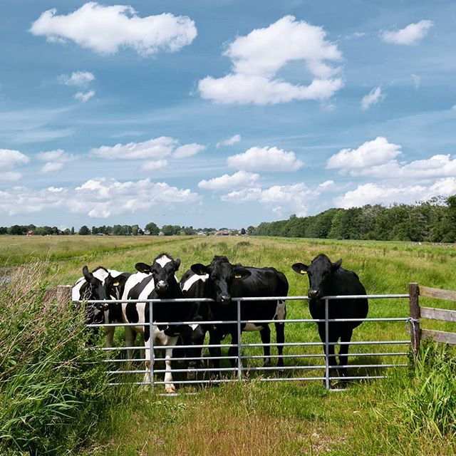 Doesn't get more Dutch than this... Have a good Friday!  #placestowanderandexplore #mooizuidholland #dutch_landscape #sky