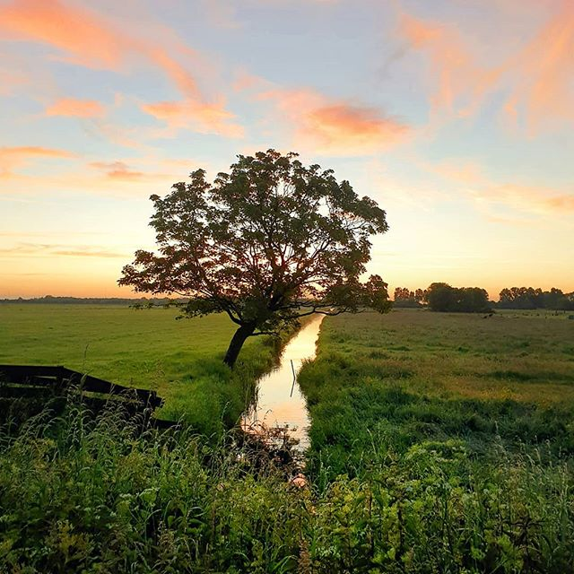From this morning 🚴‍♂️ ☀  Have a good day!  #placestowanderandexplore #sunrise #dutch_landscape #lonetree