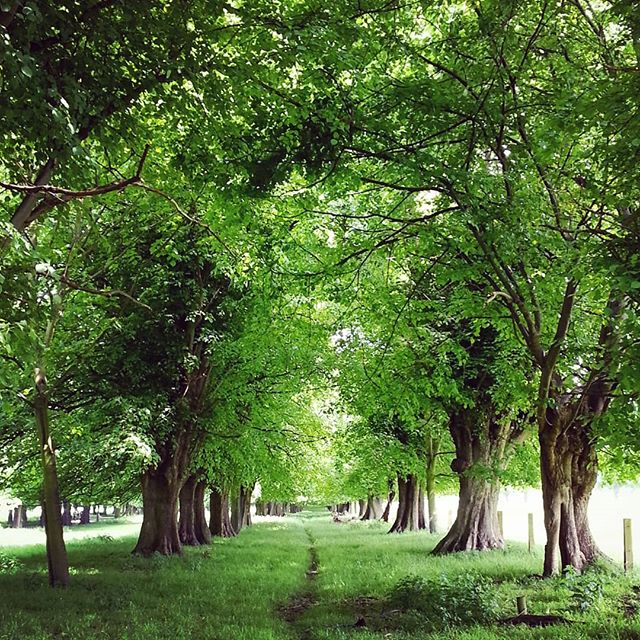 An abundance of green 🌳  England's green and pleasant land.  #placestowanderandexplore #uklandscapes #englishcountryside #trees #bbcstoke #thisprettyengland #staffordshirepeakdistrict