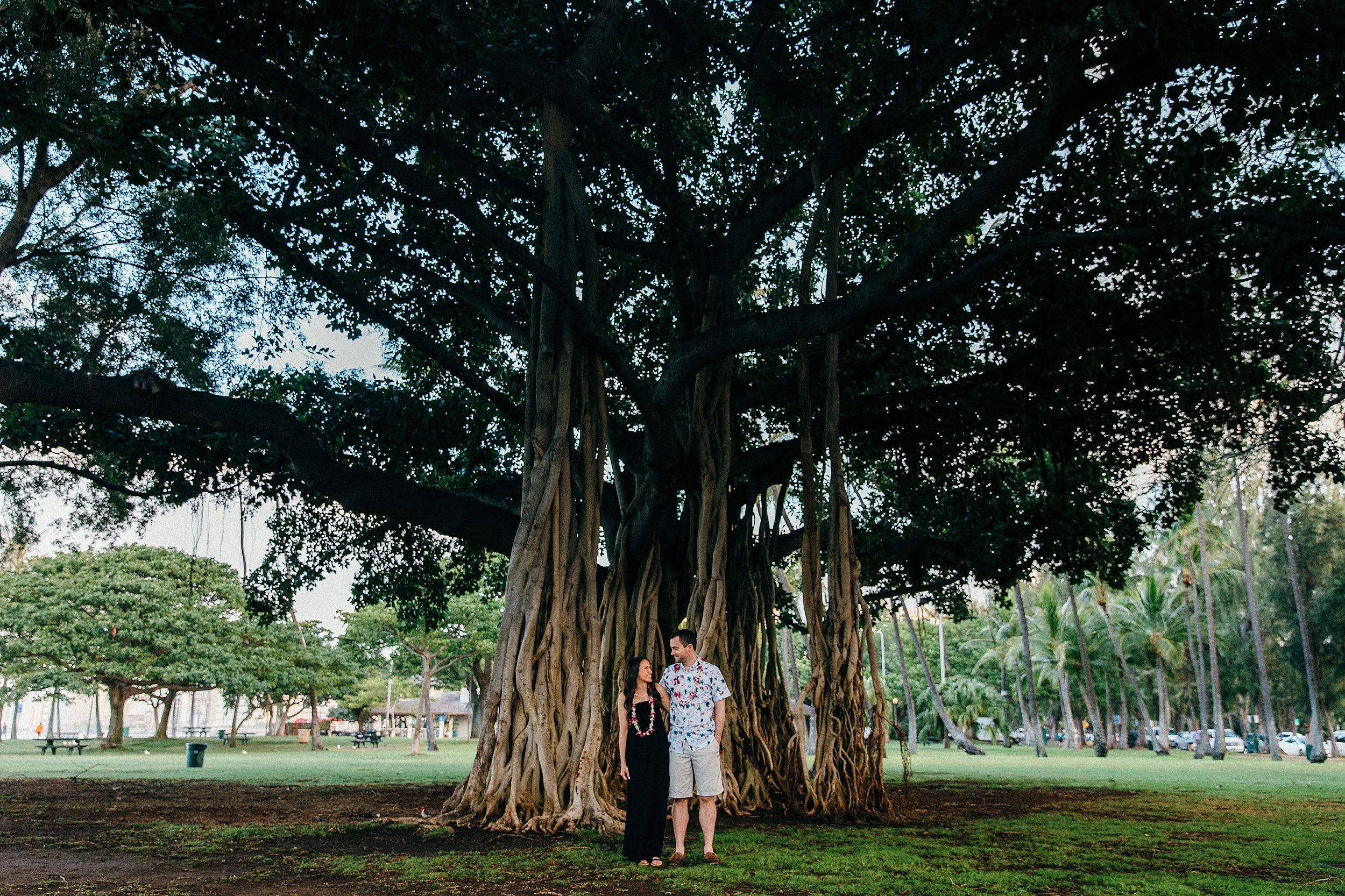 Hawaii Banyan Tree