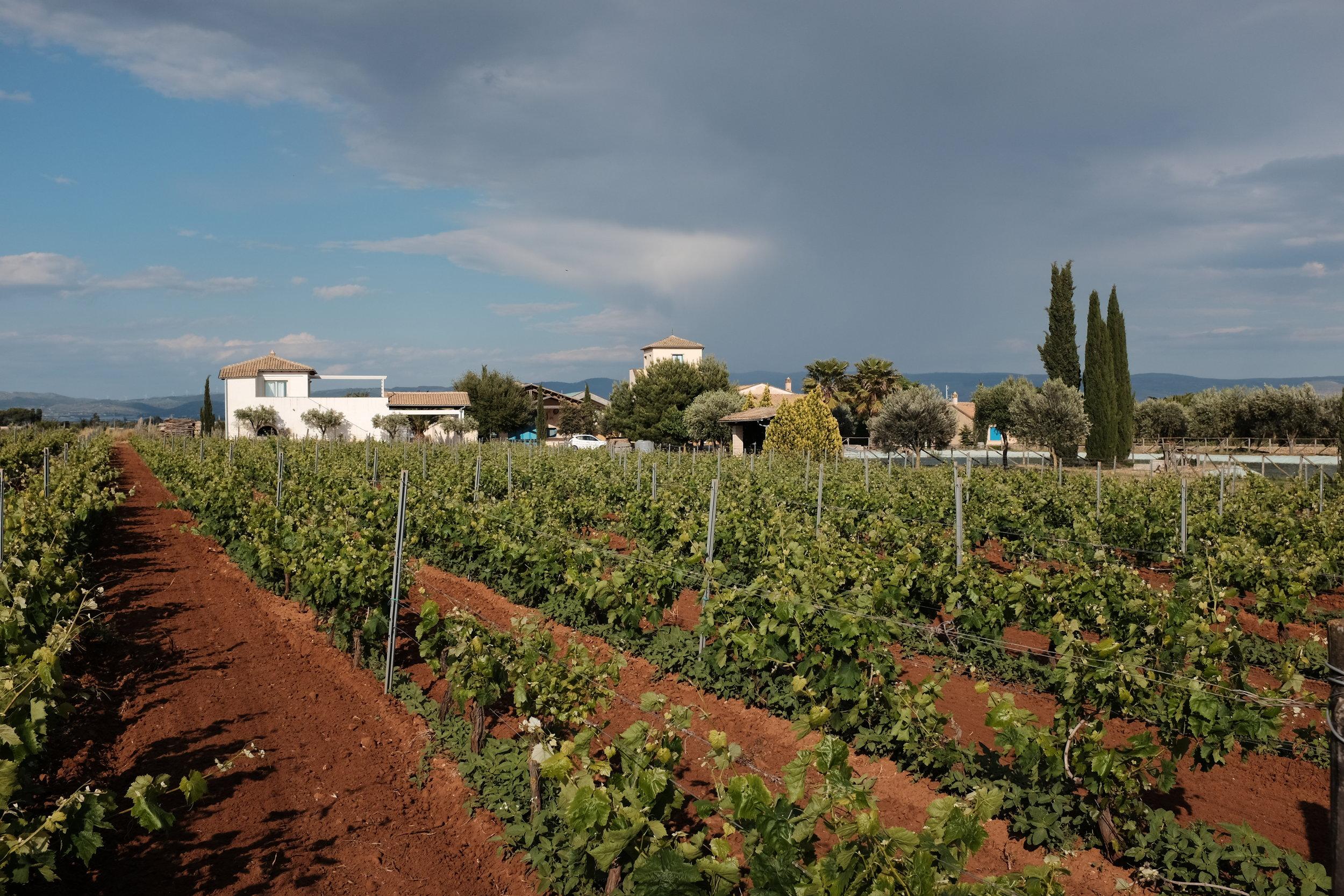 Vineyards at COS