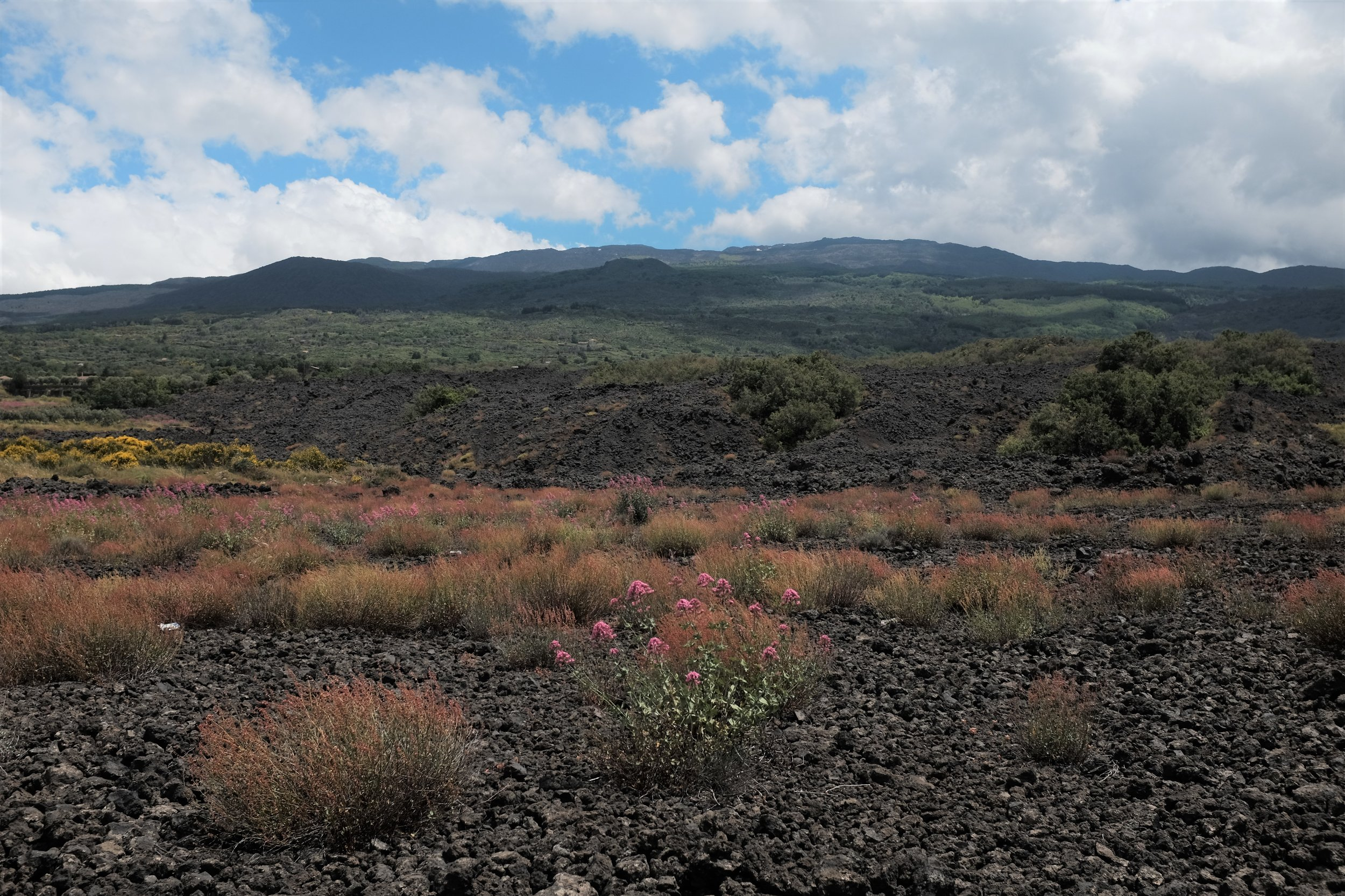 The volcanic landscape of the northern slope of Mt Etna