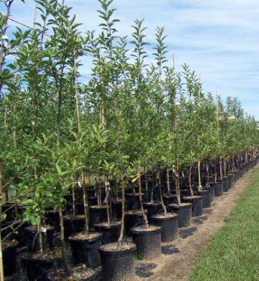 fruit-tree-nursery.jpg