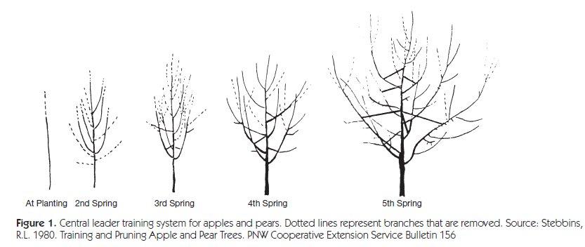 pruning 2.jpg