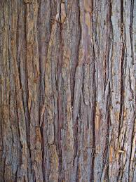 western red cedar2 .jpg