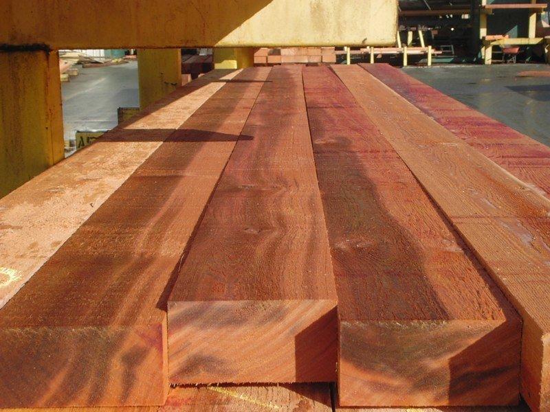 western red cedar3 .jpg