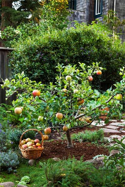 fruit in small places.jpg