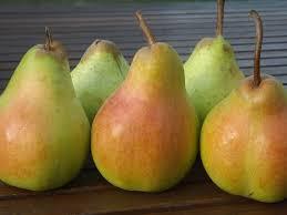 Harrow Crisp Pear
