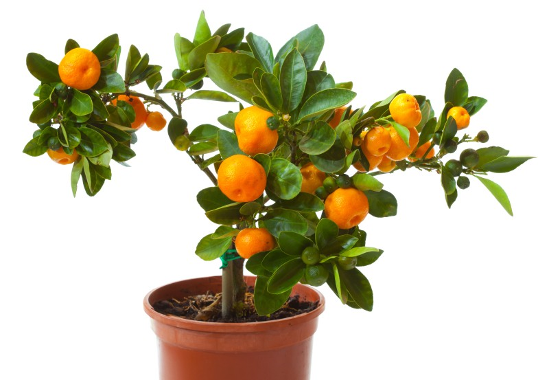 small orange.jpg