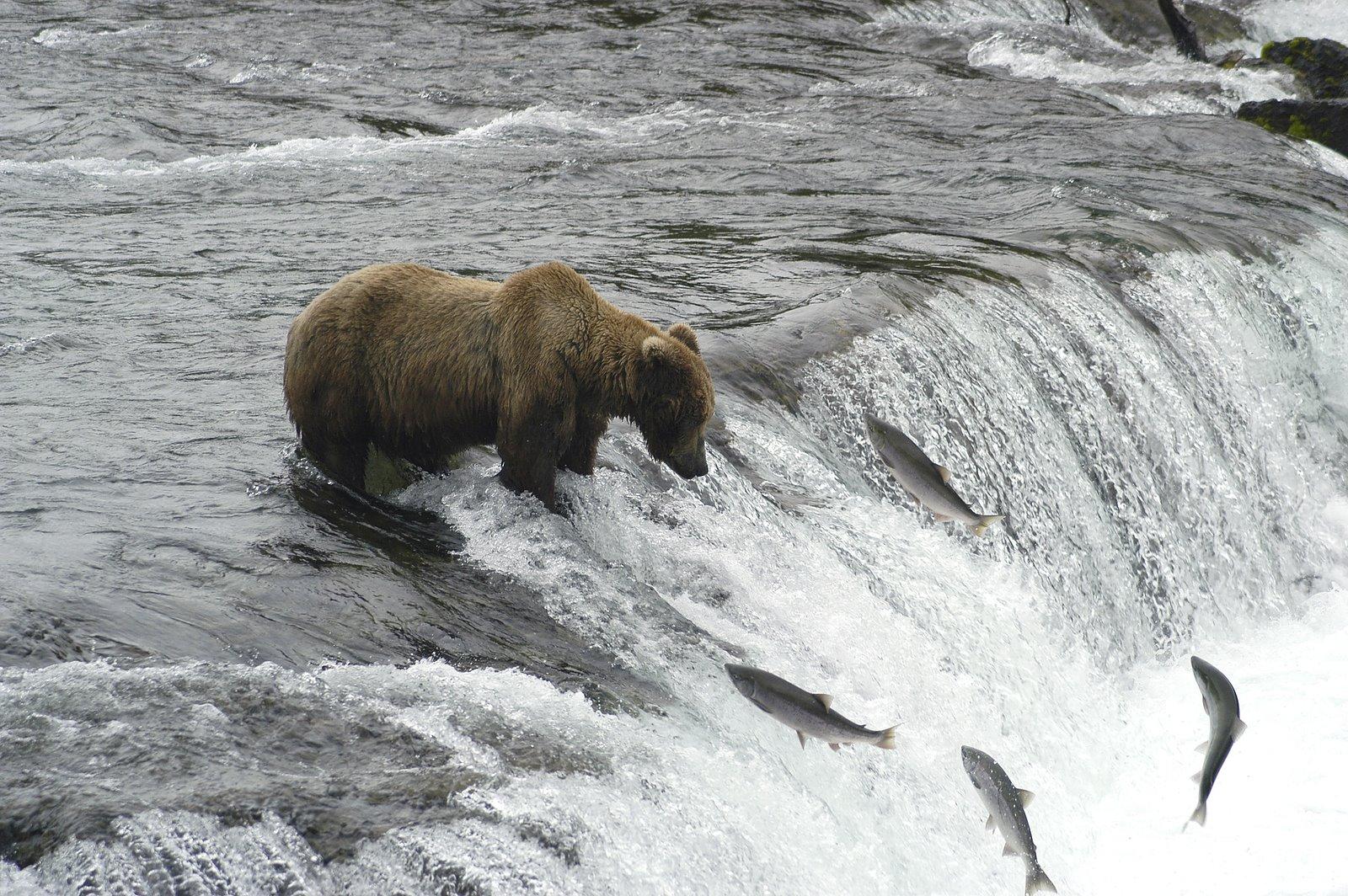 swimming-upstream.jpg