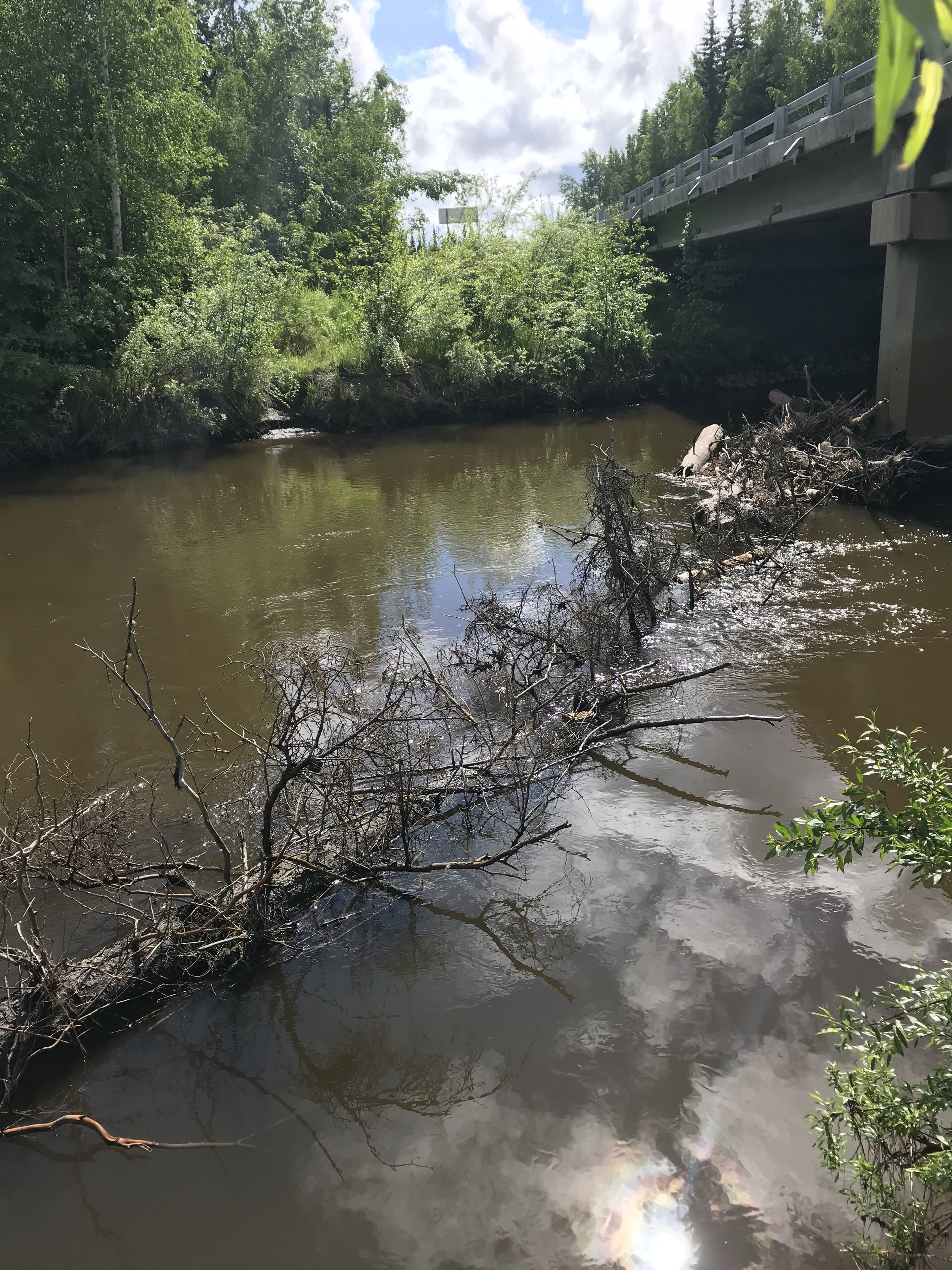 Little Chena River 6_11 (2).JPG