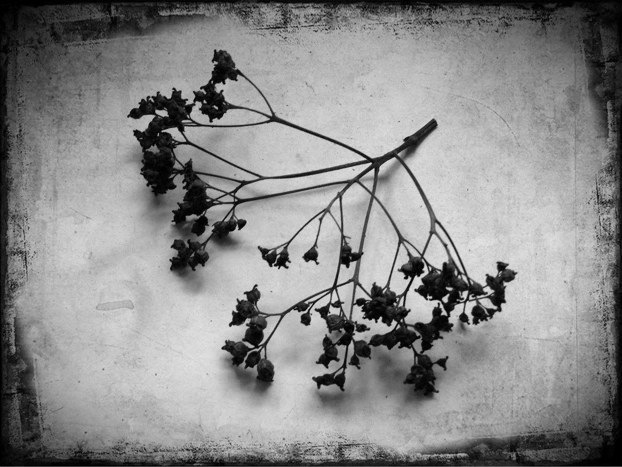 In the Winter Garden, 1
