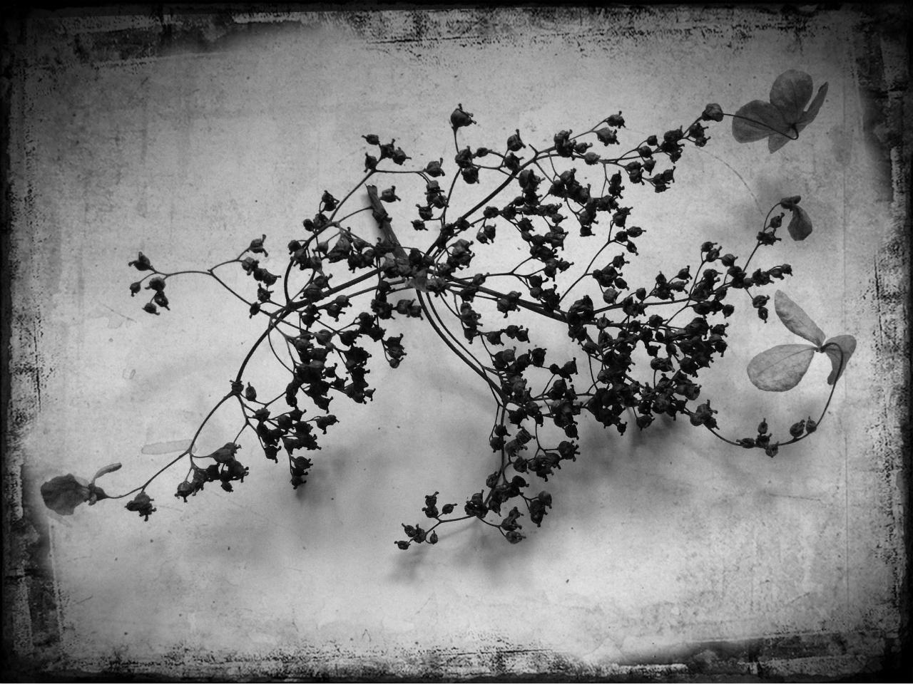 In the Winter Garden, 2  © Susan Jacobs 2013