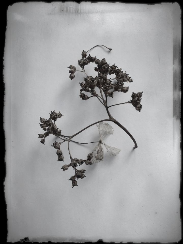 In the Winter Garden, 6