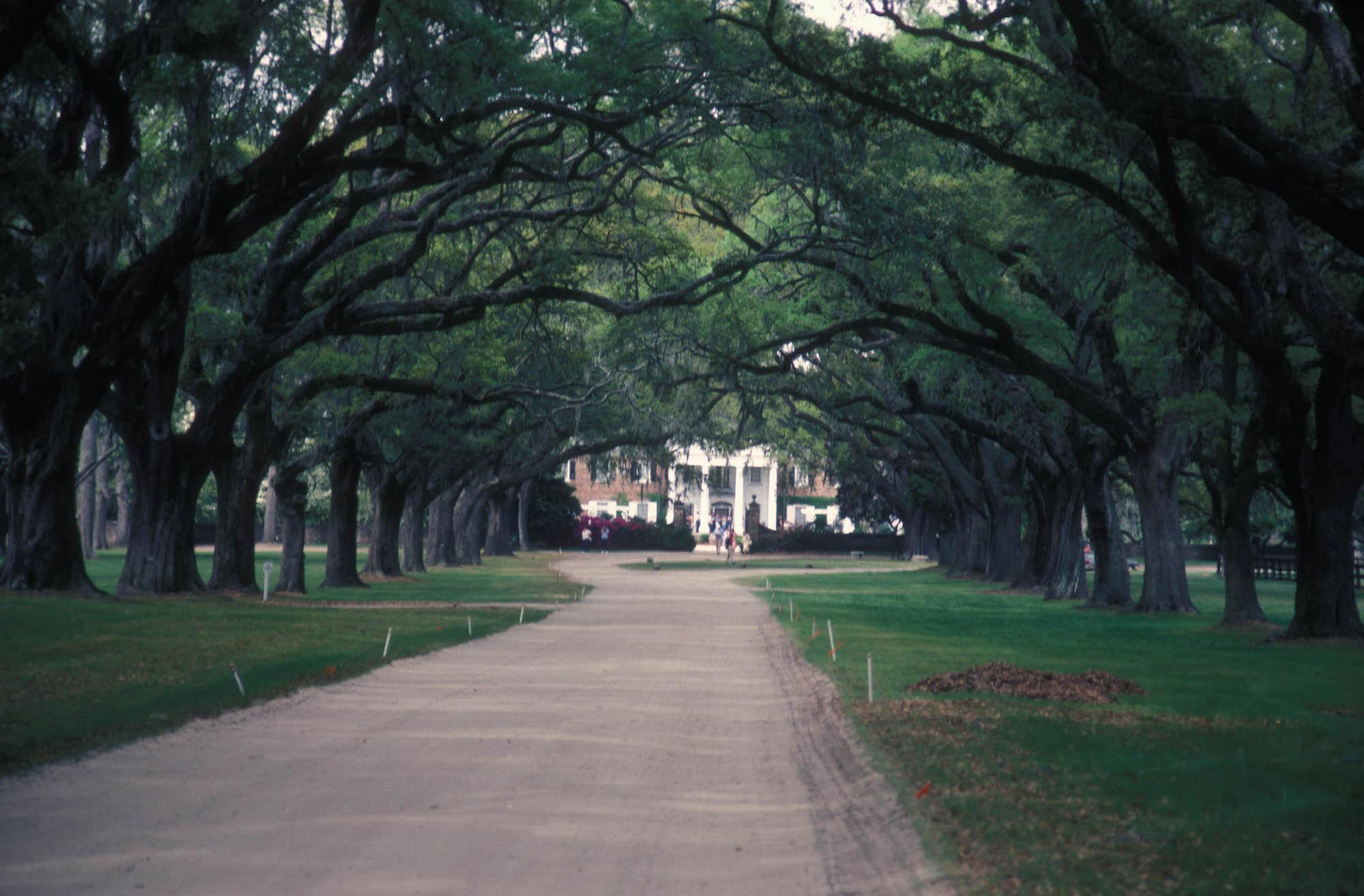 Charleston, SC Wedding Venue - Boone Hall Plantation