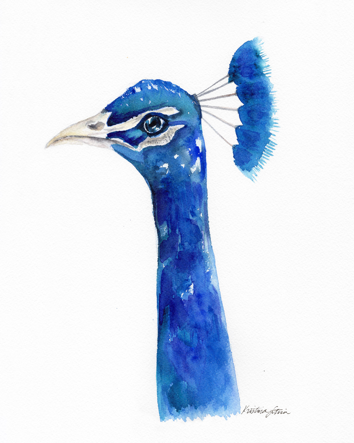 KLS_Animals_Peacock_SFW2.jpg