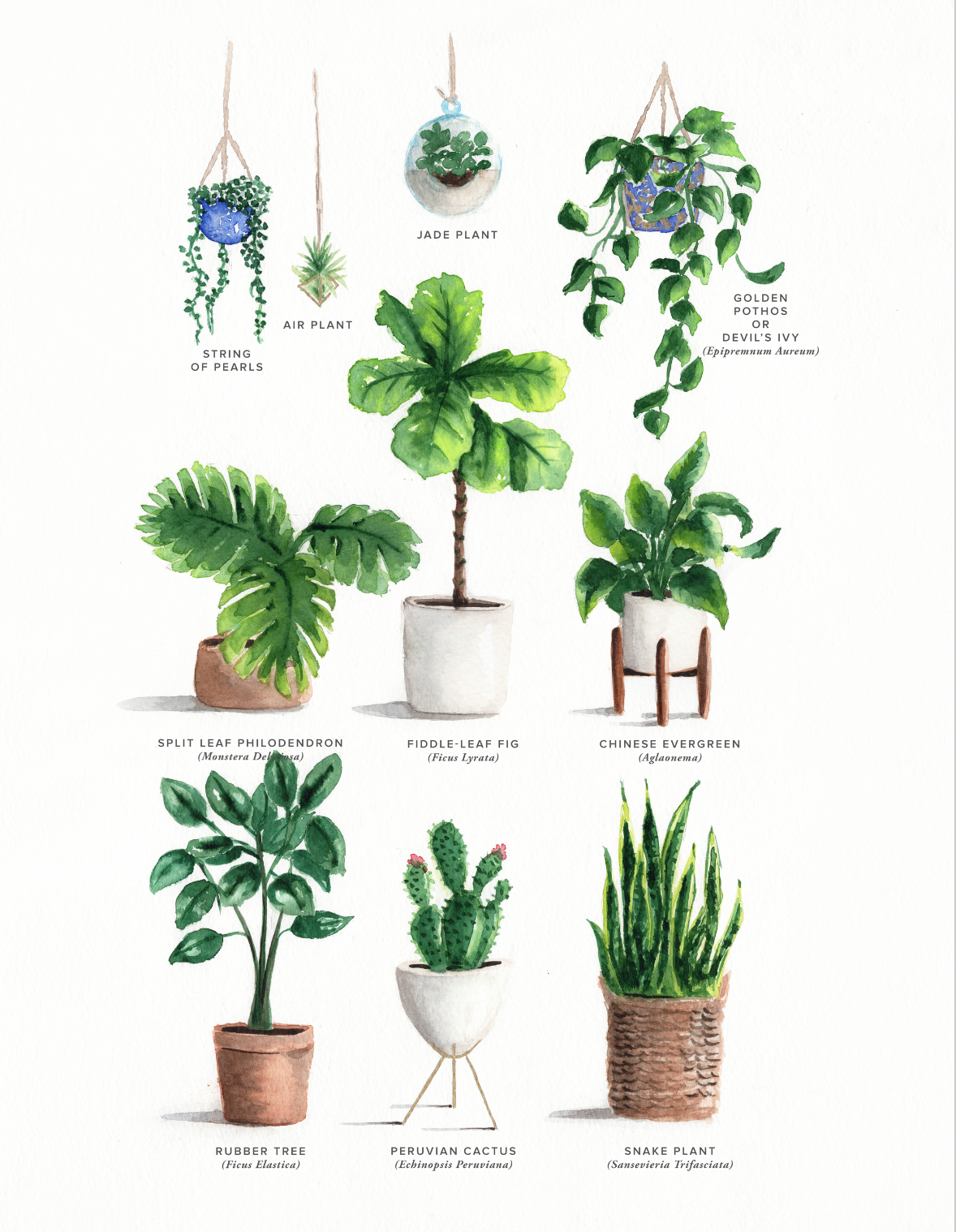 12. Green it up - Purify the air and bring in a sense of the organic with affordable plants that are easy to manage. And if you're short on space, a couple of petite succulents will do the trick perfectly.