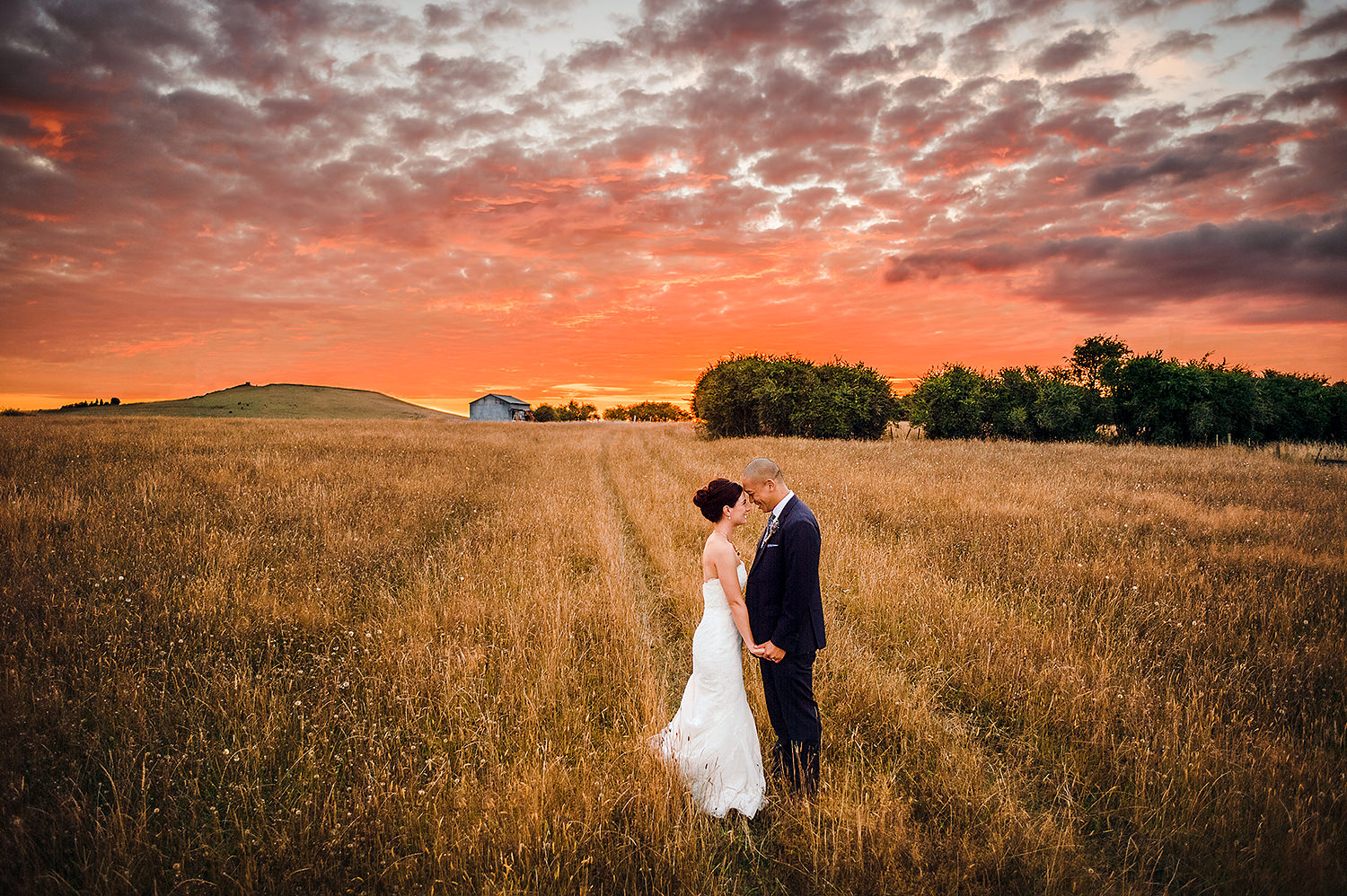 Wedding Couple in field red sunset Bracu.jpg