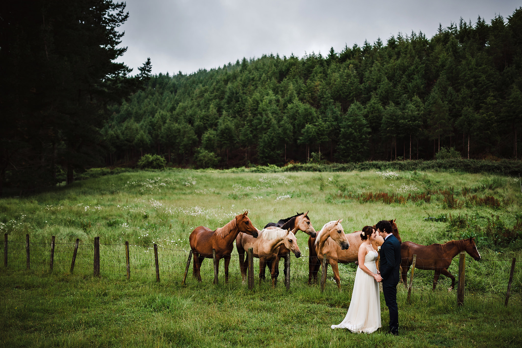 7 New Zealand Wedding Photgrapher Horses in field with couple.JPG
