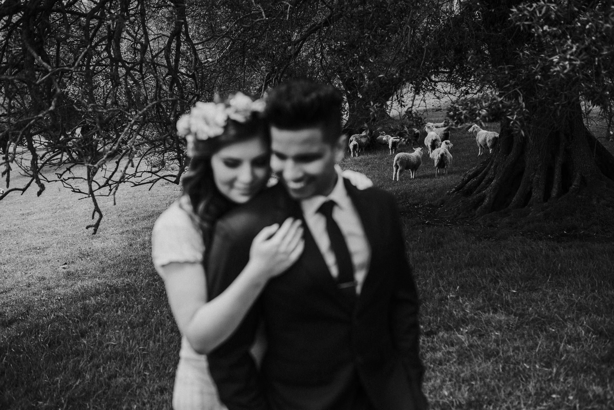 Auckland Wedding Photography with Sheep