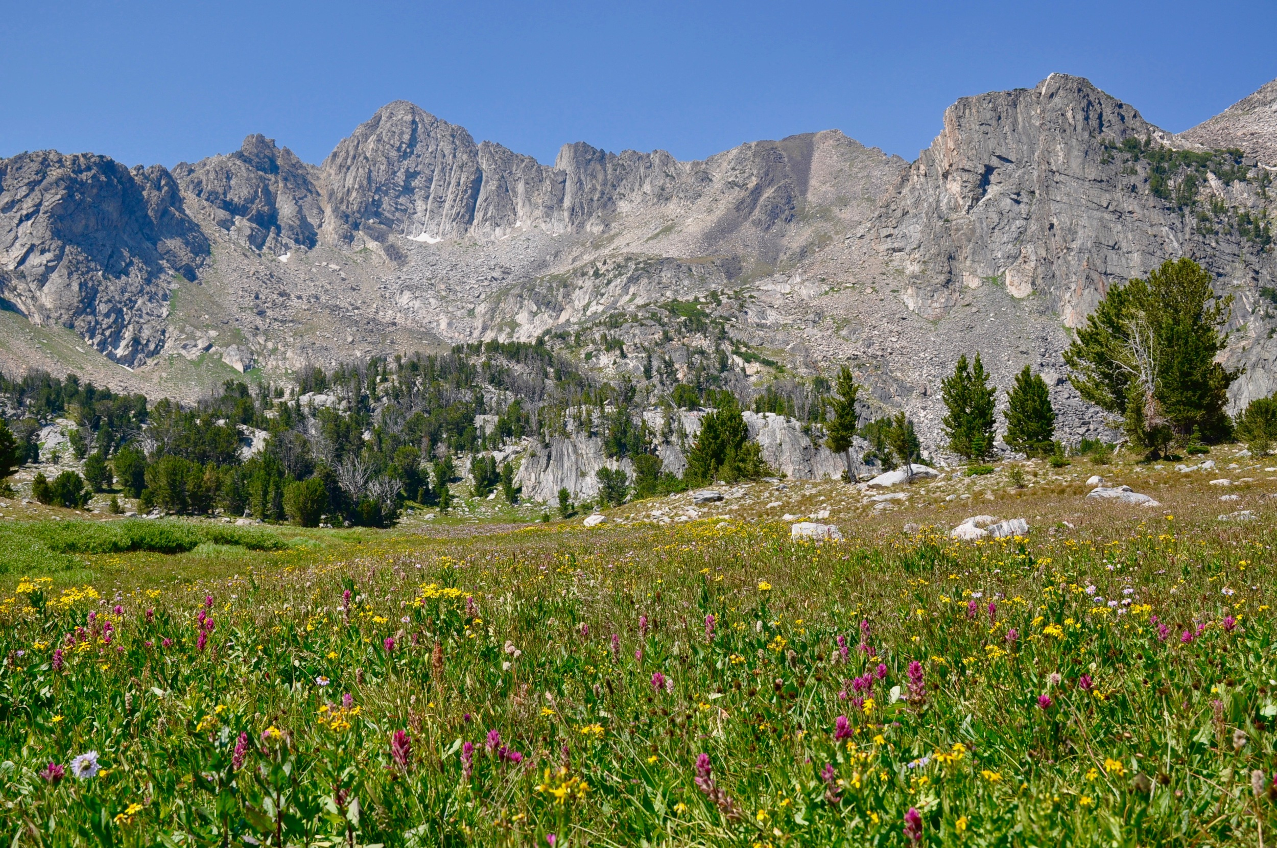 The flowers in Beehive Basin greeted us in full bloom, even under the smoke filled skies from wildfires in Idaho and absolutely scorching heat of full on high desert summer heat.  This place is one of natures great cathedral, truly sacred.  I cannot help feel awe here and reflect in the mountain lake.  Bear Basin next year.