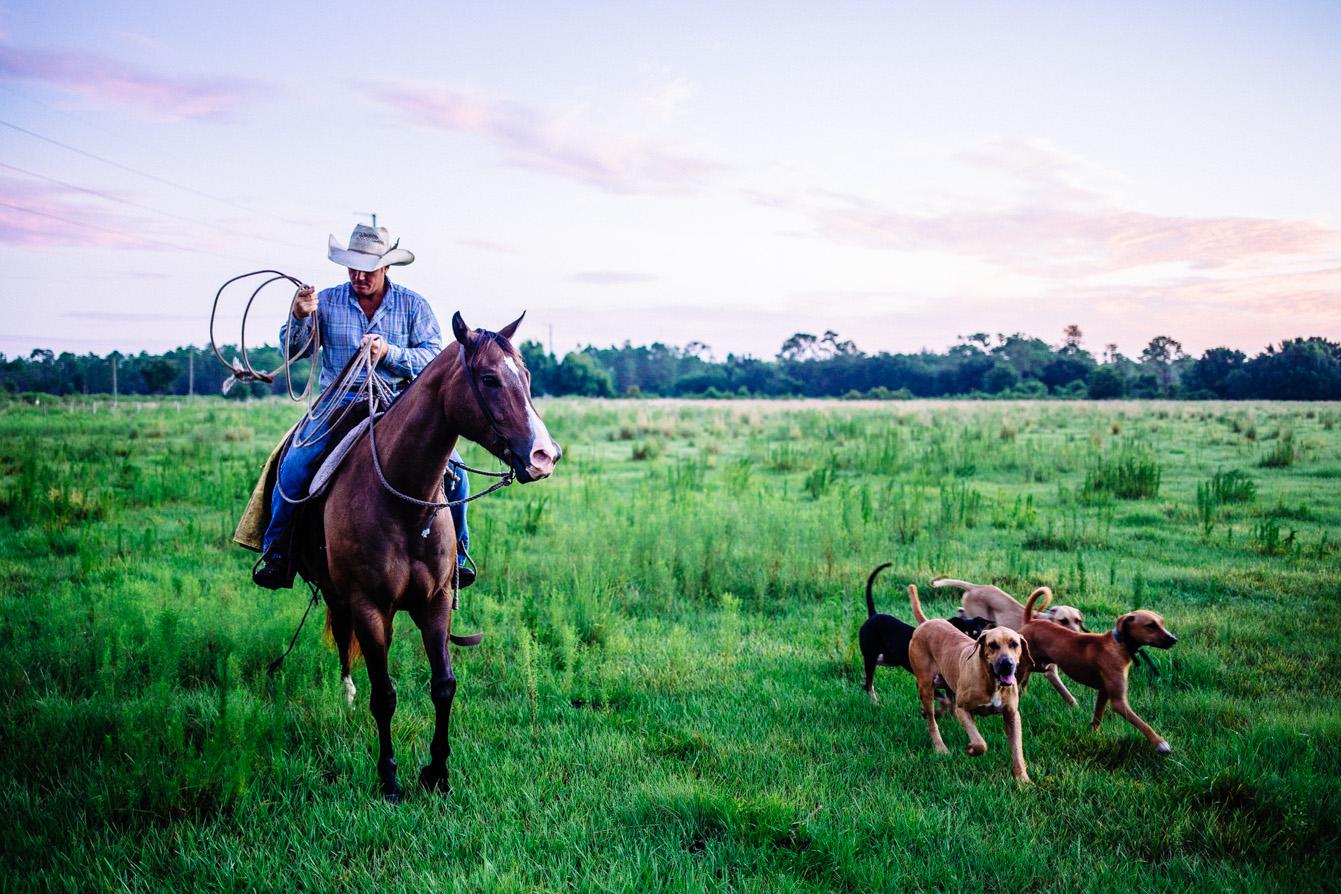 florida-cattle-7.jpg
