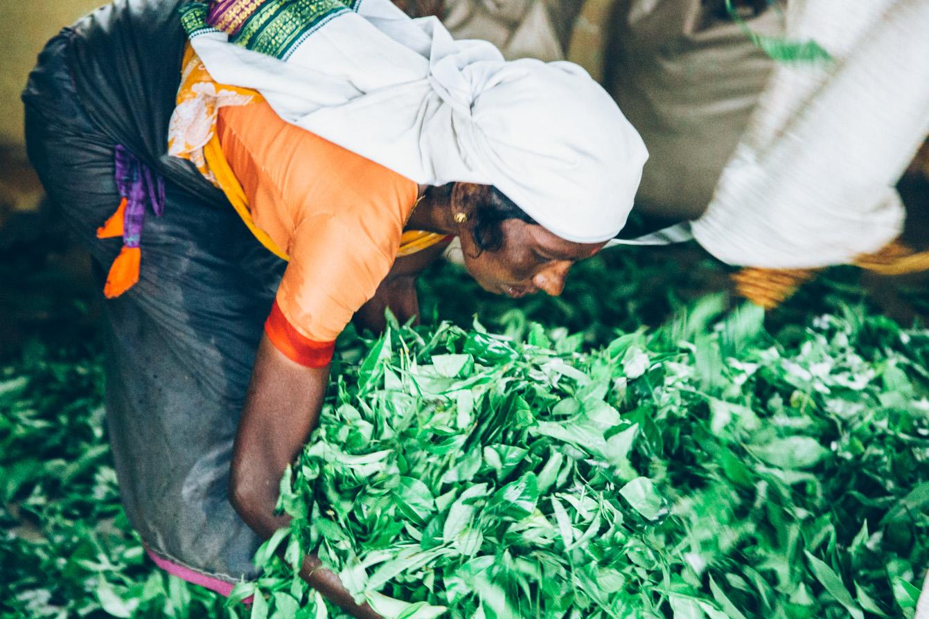 Sri-Lanka-Tea-Zach-Ashton-4.jpg