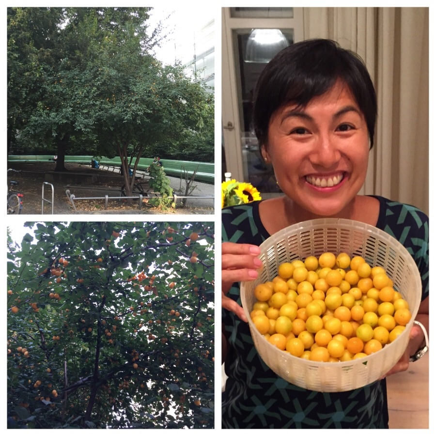 Top left and anti- clockwise: the non-descript green corner, the view from under the tree, a very happy Anh with the free goodies!