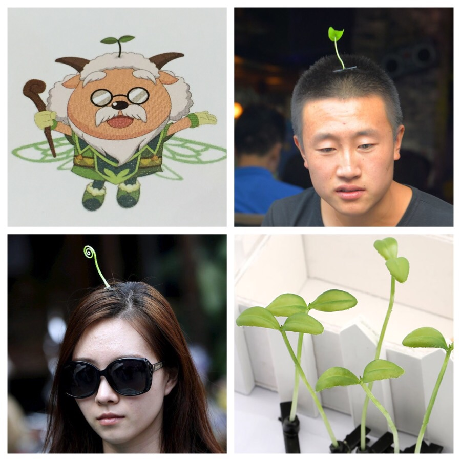 Top left and clockwise: the inspiration, apparent trendsetter, the sprouts, something different maybe?  Image sources: That's Shanghai Magazine, i2.cdn.turner.com,boredpanda.com, bbc.co.uk