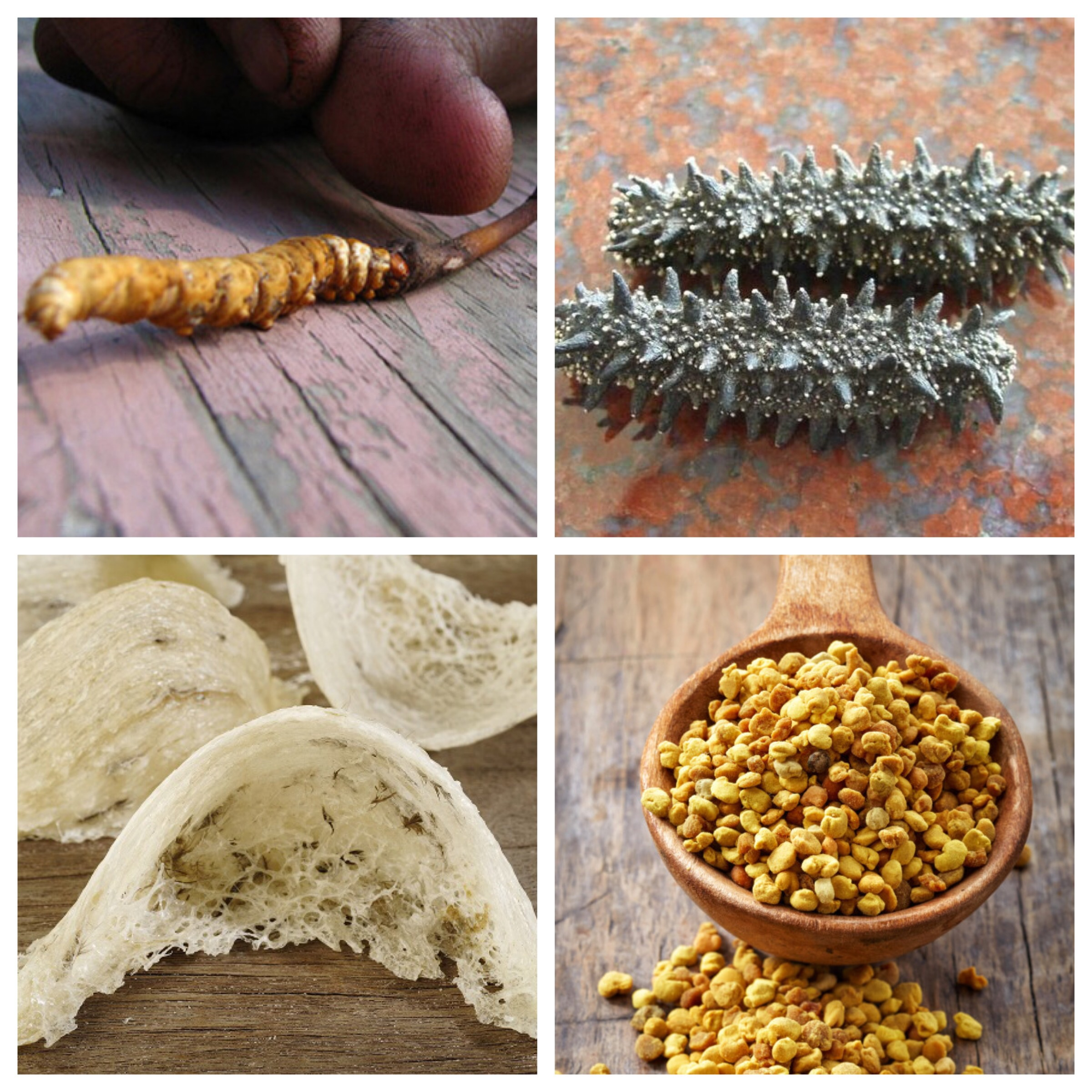 Top left and clockwise; caterpillar fungus, sea cucumber, bee pollen and birds' nests.