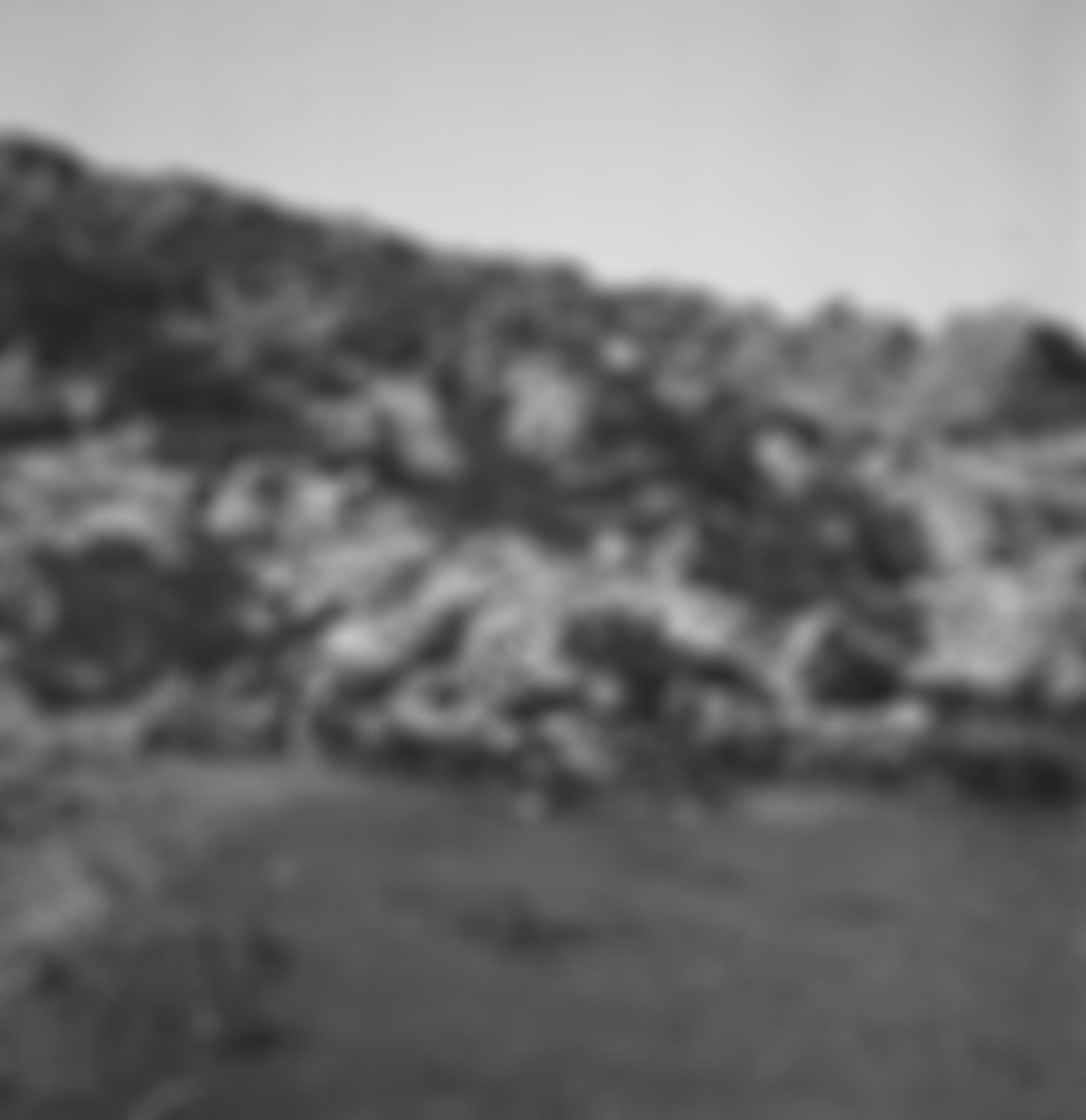 blurred97.jpg