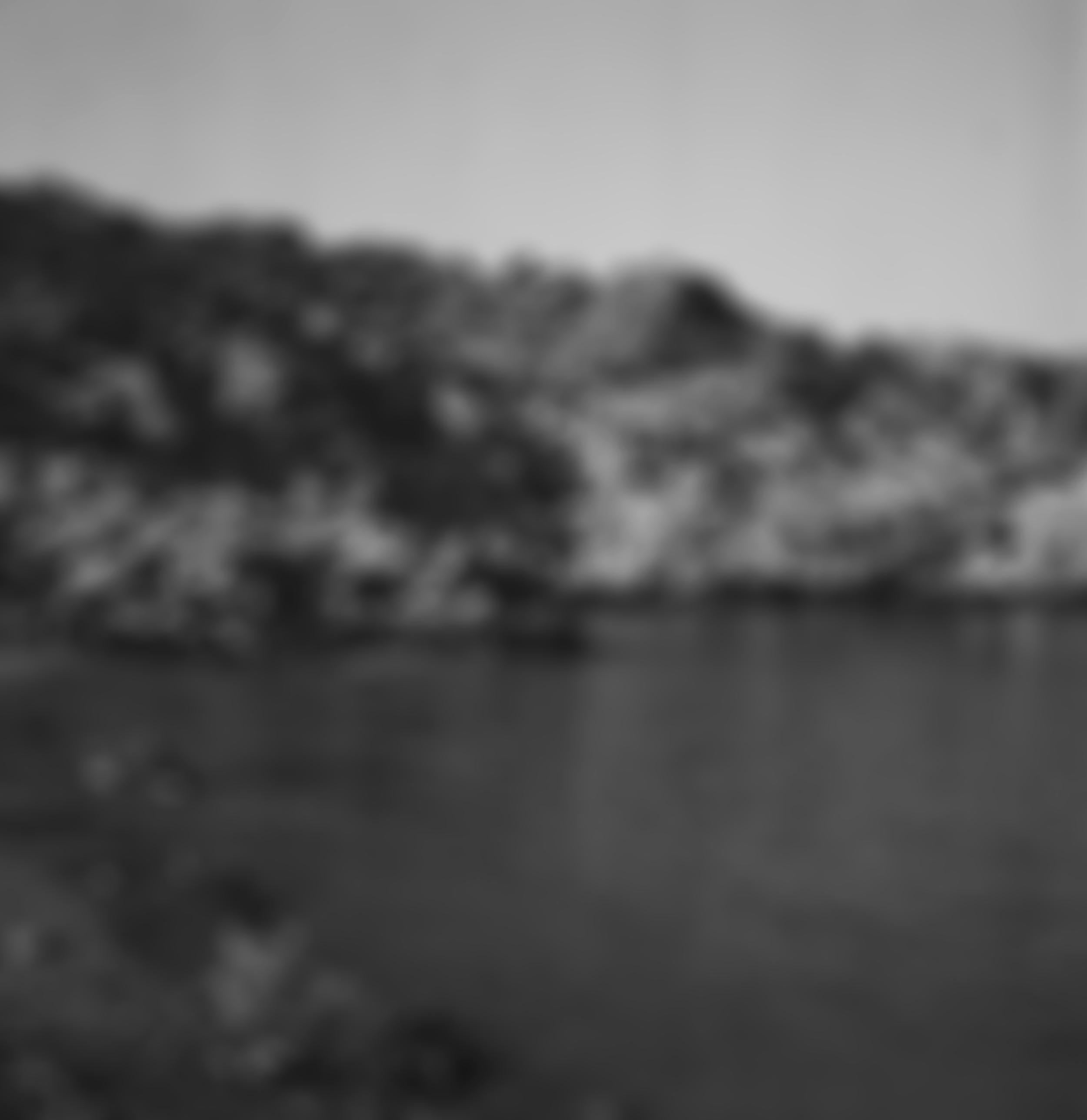 Blurred96.jpg