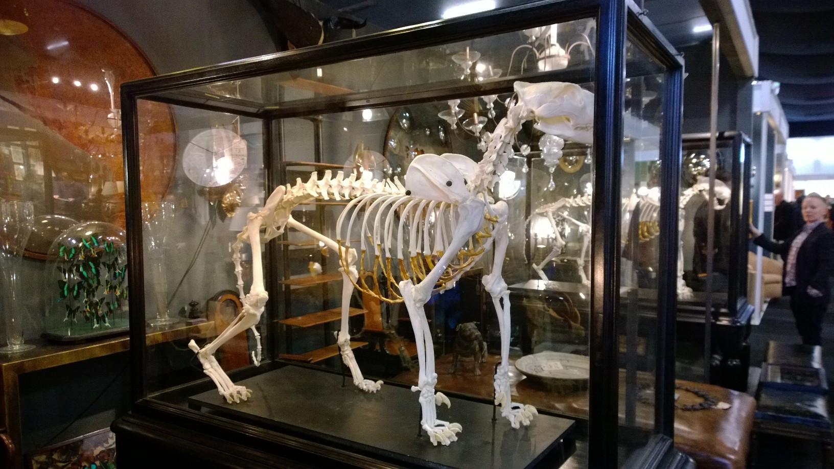 Benga Tiger Skeleton with gilding
