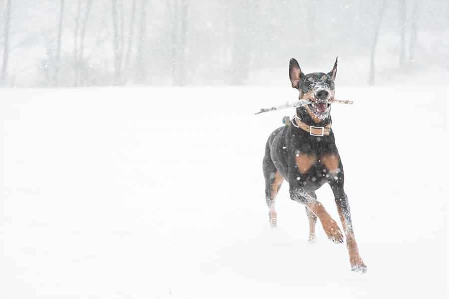 snow dog washington dc photographer