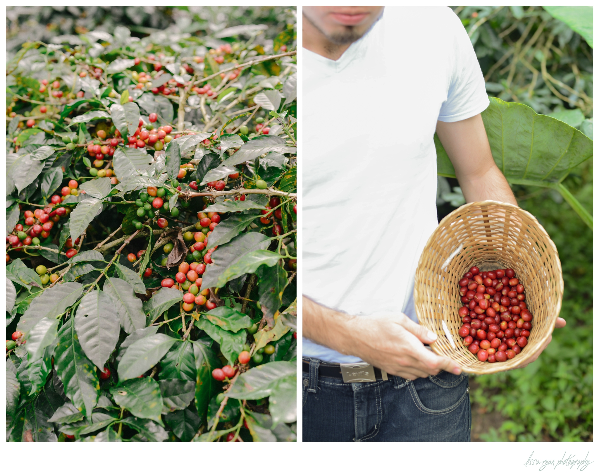colombia coffee plantation coloma travel photography lissa ryan photography