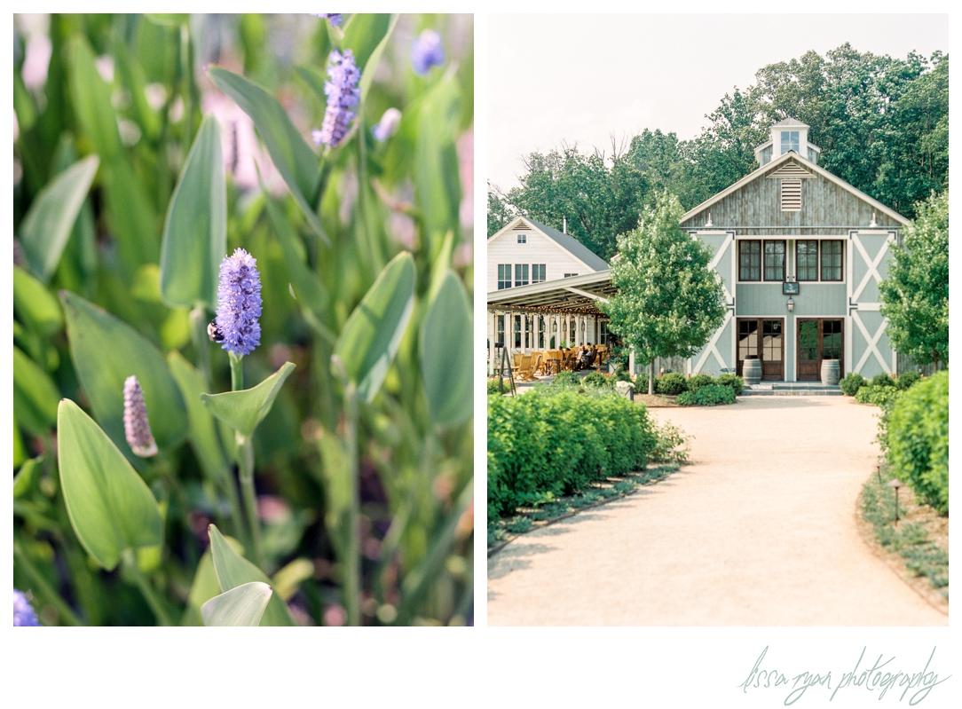 pippin hill farm and vineyards virginia wedding venue on film washington dc fine art wedding photographer lissa ryan photography