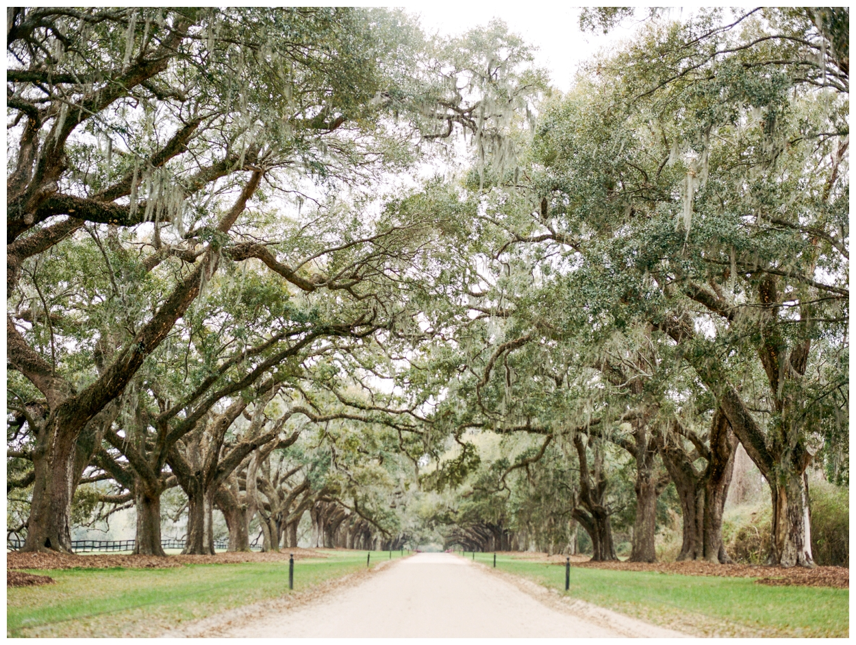 charleston, south carolina on film by destination fine art photographer Lissa Ryan Photography Boone Hall