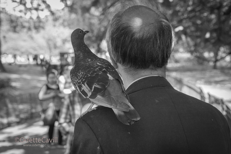 Dove on Shoulder in Hyde Park .jpg