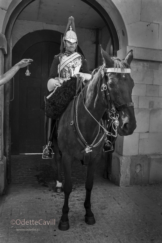 London_Tempting the Guard.jpg